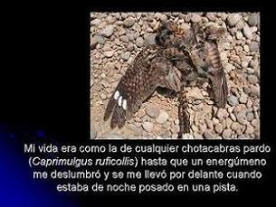 20060827130158-diapositiva5.jpg
