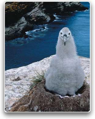 20070615185610-aves6.jpg