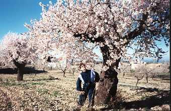 20090928134808-webalmendros-en-flor-44-71.jpg