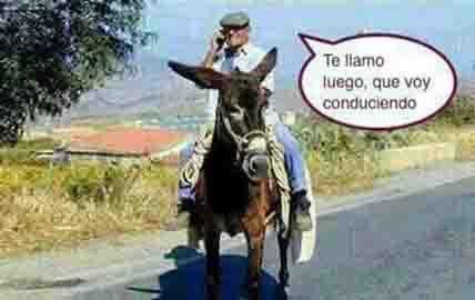 20140228113204-te-llamo-copia-burro.jpg