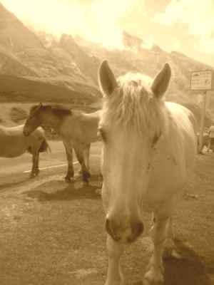 20060801002634-horse.jpg