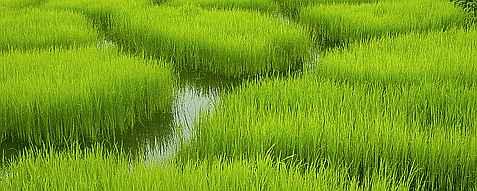 20061104213448-arroz.jpg