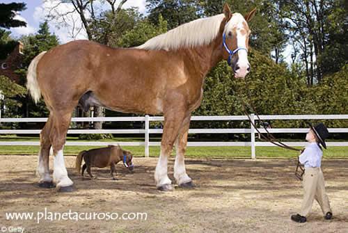 20090608175401-caballo-grande-pequeno.jpg