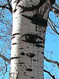 20081102215051-blog-los-ojos-de-los-arboles.jpg