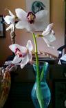 20110328002551-b-mis-orquideas.jpg