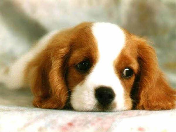 Ventajas de tener un Perro en casa