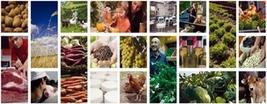 20130116132141-agricultura-ecologica-informe-2011-p.jpg