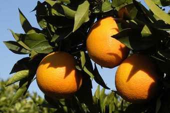 20130311143231-naranjas-p.jpg