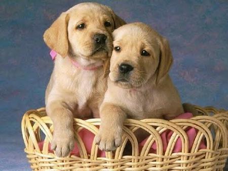 external image 20080412111306-perros-portada.jpg
