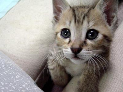 20080415171127-2-gatos.jpg