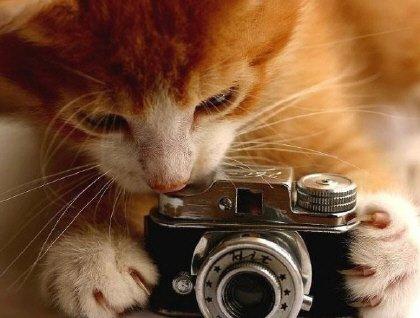 """No se puede mostrar la imagen """"http://zaragozaciudad.net/isabel/upload/20090621114935-gatos-graciosos003.jpg"""" porque contiene errores."""