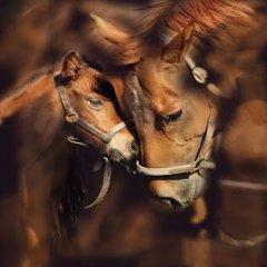 20150502193600-dos-caballos-hermosos.jpg