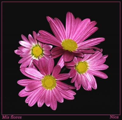 Regalo al de arriba - Página 2 20081208133946-20060614095256-mis-flores