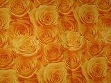 20060905103229-rosas.jpg