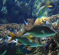 20061102141418-fondomarino.jpg