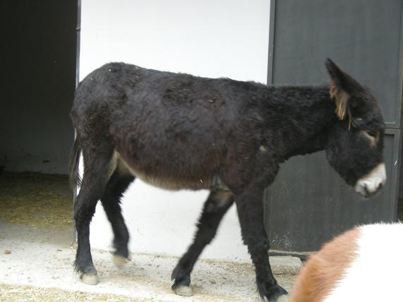 20080827222240-burro-1.jpg