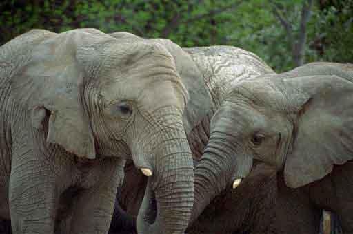 20071127213233-elefantes.jpg