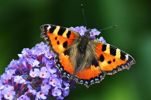 20210827215440-butterfly-1705523-640.jpg