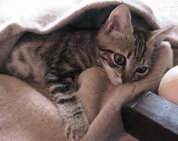 20070322174424-cuidar-gato-enfermo.jpg