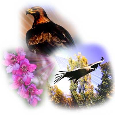 20081017183215-fauna-y-flora.jpg