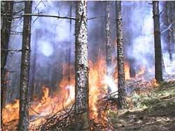 20070605101433-incendio2.jpg