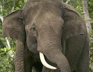 20070901165202-elefante.jpg