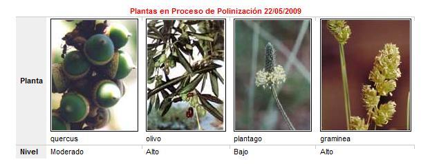 20090522110549-niveles-polen-zaragoza.jpg