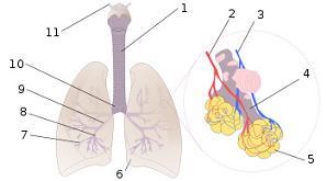 20090826201212-relajacion-ejercicios-respiracion.jpg