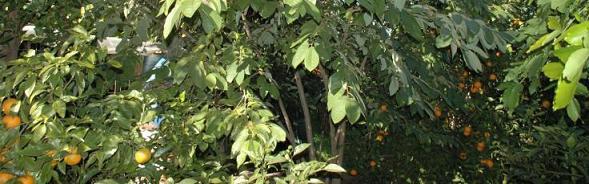 20090831083350-bosque-de-alimentos-en-alzira.jpg