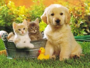 20081108170544-gatos-perros.jpg