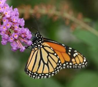 20081116190042-mariposas.jpg